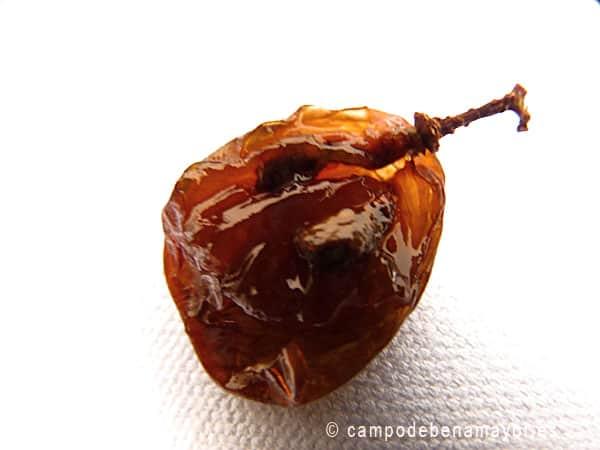 Vista de las semillas de uva