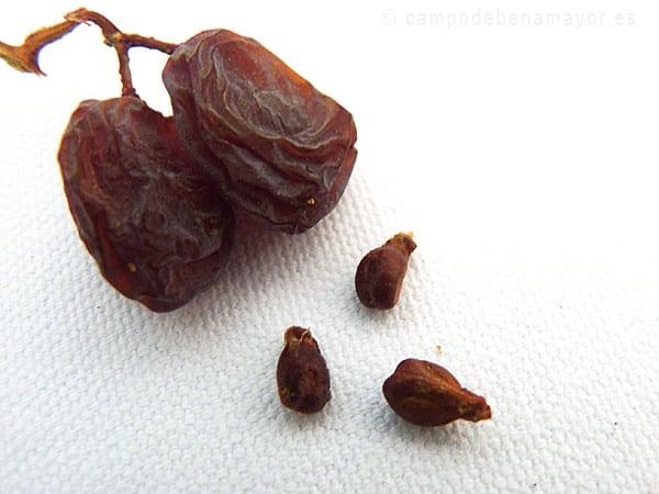 Semillas de uva en las pasas Moscatel