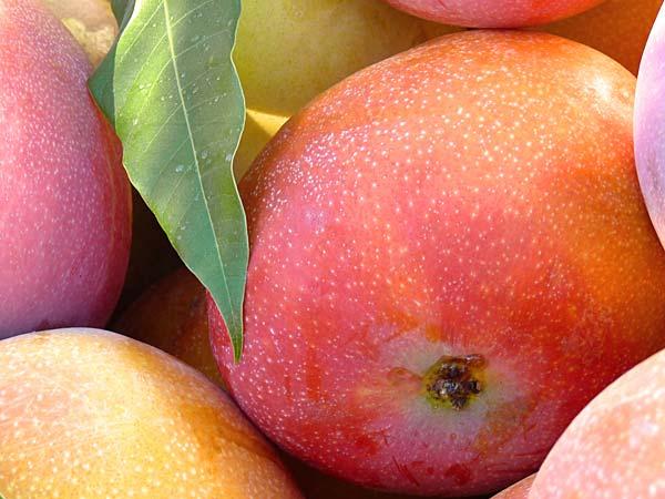 propiedades del mango, la fruta tropical que encuentras en nuestra frutería online