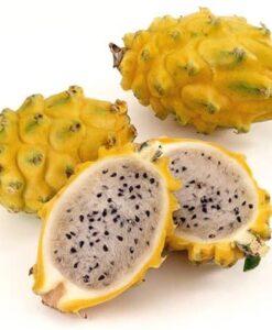 Fruta de la planta de pitahaya H. megalanthus