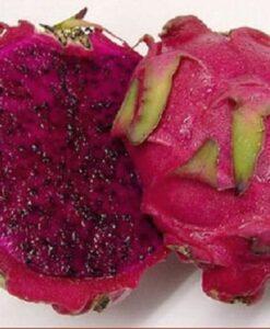 Fruta de la planta de pitahaya roja JC02