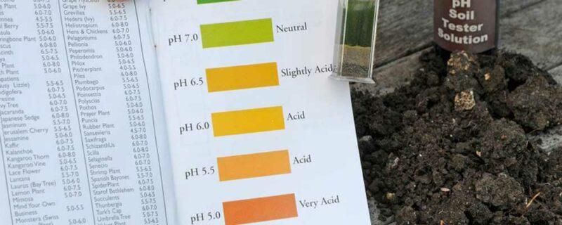 Cómo influye el pH del suelo en la nutrición de las plantas