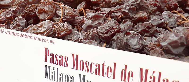 Pasas Moscatel producidas por Campo de Benamayor en Malaga