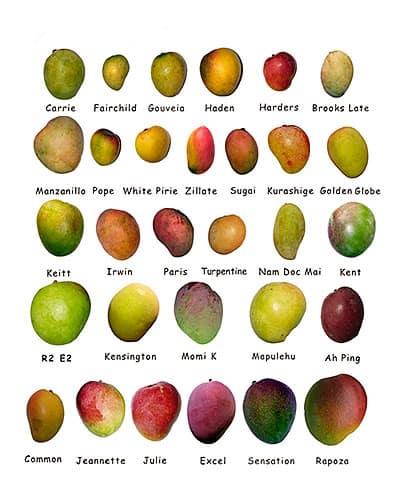 Propiedades del mango y variedades