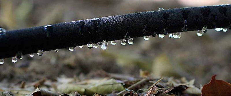 El riego del aguacate es el factor clave que debes tener en cuenta
