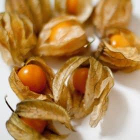 Planta de physalis con fruta