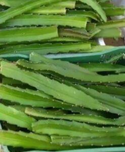 Esquejes de pitahaya listos para comprar online y plantar