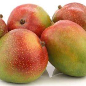 Fruta de la planta de mango Kent