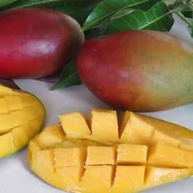 Fruta de la planta de mango Palmer