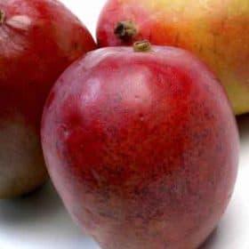Fruta que produce la planta de mango Tommy Atkins
