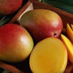 Fruto de la planta de mango Sensación