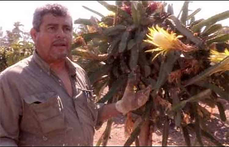 Ingeniero Ramiro Lobo explicando la polinización de la pitaya