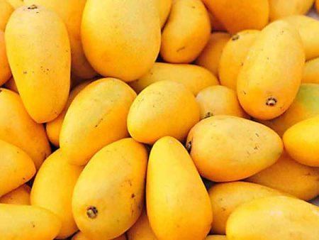 La semilla del mango Gomera-3 es la adecuada para sembrar